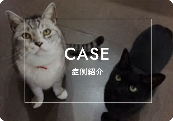 CASE 症例紹介